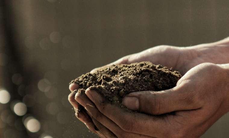 Compost: 7 aspectos que deberías conocer sobre el compostaje